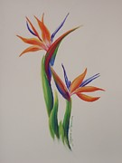 Floral Drawings Originals - Birds of paradise -In Love by Tatjana Popovska