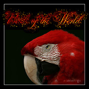 Tropical Rainforest Digital Art Prints - Birds of the World Print by Sharon Mau
