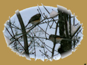 Image Of Bird Prints - Birds Of Winter Snow Print by Debra     Vatalaro