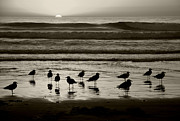 Ocean Birds Prints - Birds on a Beach Print by Timothy Johnson