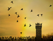 Rooftop Digital Art Prints - Birds On A Rooftop Print by Gothicolors And Crows