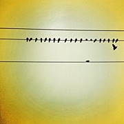 Birds Art - Birds on a wire by Julie Gebhardt