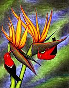 Birds Of Paradise Prints - Birds on Birds Print by Don McMahon