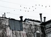 Spooky Originals - Birds on Grain Elevator by Marilyn Hunt