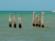 Key West Mixed Media - Birds on Sticks by David  Van Hulst