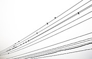 Flock Of Bird Art - Birds On Wire by Noriaki Maeda