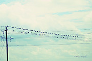 Birds On Wires Blue Tint Print by Paulette B Wright