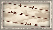 Susan Kinney Art - Birds On Wires by Susan Kinney