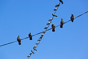 Bird On A Wire Prints - Birds Perched on Wires Print by Inti St. Clair