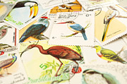 Stamp Collection Art - Birds stamps by Fernando Barozza