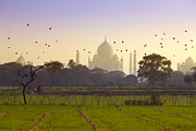 Flock Of Bird Art - Birds Take Flight Near Taj Mahal by Adrian Pope
