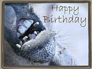 Donkey Mixed Media Posters - Birthday Donkey Poster by Veronica Ventress