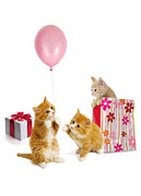 Balloon Digital Art Prints - Birthday Kitties Print by Bob Nolin