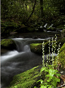 River Prints Posters - Bishops Cap on Big Creek Poster by Rob Travis