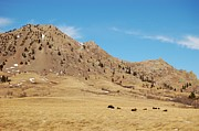 American Bison Prints - Bison at Mato Paha-Bear Butte Print by Dakota Light Photography by Nadene