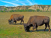 Bison Digital Art - Bison Grazing in the Badlands by Ruth Hager