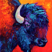Bison Prints - Bison Head Color Study II Print by Marion Rose