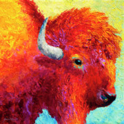 Prairies Paintings - Bison Head Color Study IV by Marion Rose