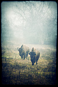 Muted Prints - Bison Print by Katya Horner