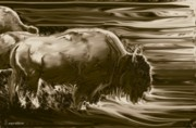 Bison Digital Art - Bison ... Montana Art Photo by GiselaSchneider MontanaArtist
