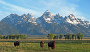 Bison Photos - Bison Range by Scott Mahon