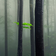 Bit Of Green Print by Evgeni Dinev