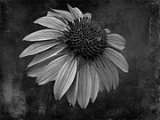 Bittersweet Metal Prints - Bittersweet Memories - BW Metal Print by David Dehner