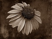 Bittersweet Metal Prints - Bittersweet Memories - S Metal Print by David Dehner