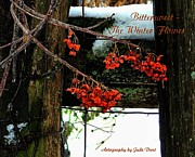 Photos Of Bittersweet Posters - Bittersweet The Winter Flower Poster by Julie Dant