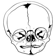 Clip Drawings Prints - Bizarre Skull Print by Michal Boubin