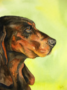 Watercolour Portrait Prints - Black and Tan Coonhound Print by Cherilynn Wood