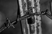Barbs Prints - Black and White Barbed Wire Print by Wilma  Birdwell