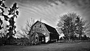Horse And Buggy Prints - Black and White Barn Print by Steve McKinzie