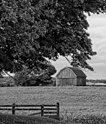 Timothy Thurman - Black and White Barn