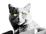 Outlook Posters - Black and White Cat Poster by Karen Lewis