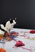 Colored Background Art - Black And White Cat Sitting On Top Of Strands Of Wool, Looking Away by Michael Blann