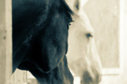 Stallion Photo Originals - Black and white by Den Lity