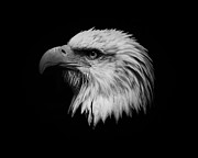 Independance Framed Prints - Black and White Eagle Framed Print by Steve McKinzie