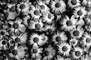 Chic Prints - Black And White Flowers Print by Sumit Mehndiratta
