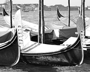 Grande Canal Posters - Black and white gondolas Venice Italy Poster by Rebecca Margraf