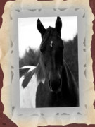 Paint Horse Mixed Media Posters - Black And White Horse Portrait Poster by Debra     Vatalaro