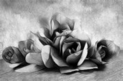 Magnolia Macro Framed Prints - Black and White Is Beautiful Framed Print by Zeana Romanovna