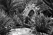 Flagstones Prints - BLACK AND WHITE MEXICAN PATIO with Stone Arbor San Diego California USA Print by Sherry  Curry