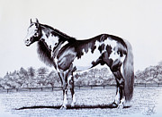 Horse Drawings Prints - Black and White Overo Paint Horse Print by Cheryl Poland