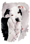 Dog Portrait Artist Drawings - Black and White Pit by Debra Jones