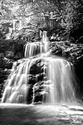 Sunshine Pyrography Prints - Black and White Shenandoah Falls Print by Shane York