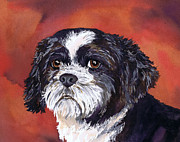 Water Color Paintings - Black and White Shih Tzu on Red by Cherilynn Wood