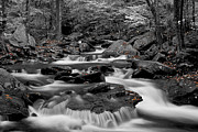 Empty Framed Prints - Black and White stream at Ricketts Glen Framed Print by Robert Wirth