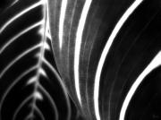 Jeff Breiman - Black and White Stripes