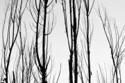 James Insogna Framed Prints - Black and White Tree Branches Abstract Framed Print by James Bo Insogna
